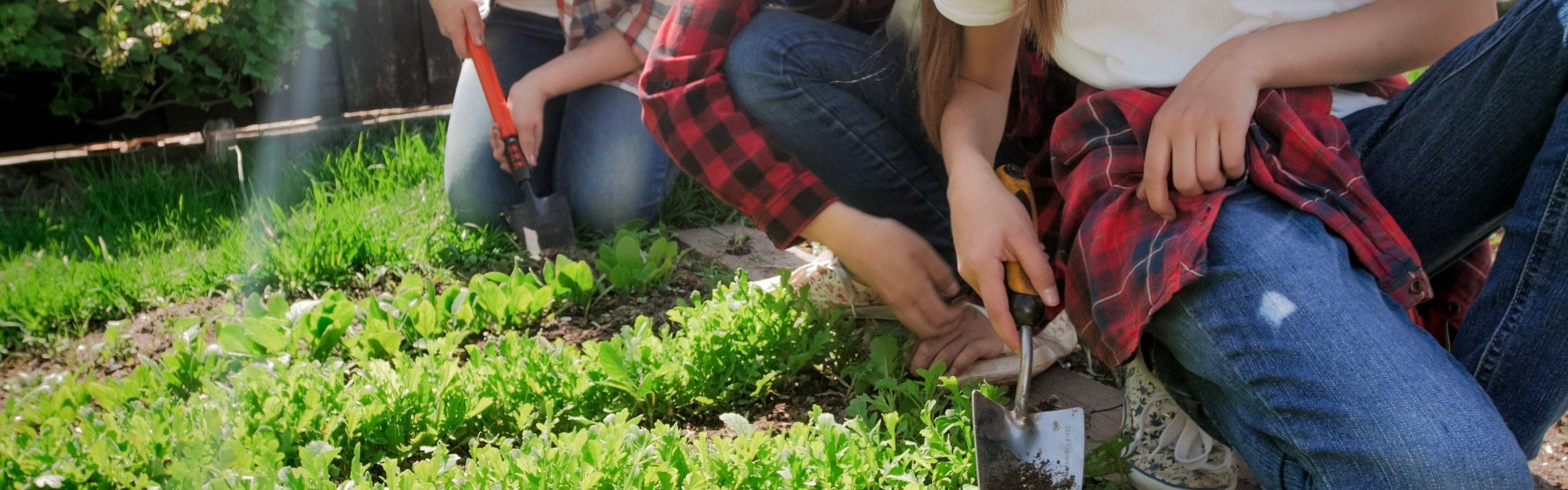 teens working in the garden